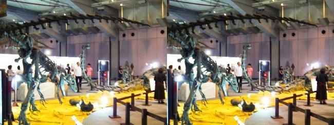 メガ恐竜展2017 ZONE4 アロサウルス骨格復元③(交差法)