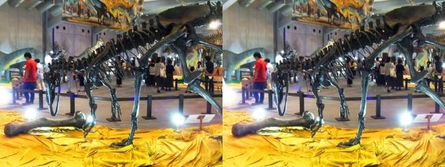 メガ恐竜展2017 ZONE4 アロサウルス骨格復元②(平行法)