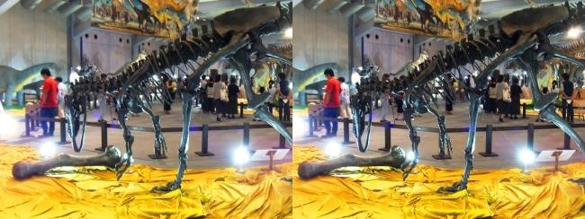 メガ恐竜展2017 ZONE4 アロサウルス骨格復元②(交差法)