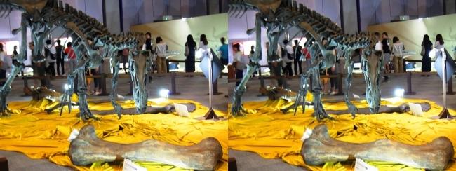 メガ恐竜展2017 ZONE4 アロサウルス骨格復元①(平行法)