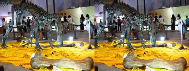 メガ恐竜展2017 ZONE4 アロサウルス骨格復元①(交差法)