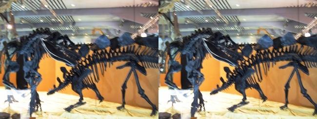 メガ恐竜展2017 ZONE4 アロサウルス・ステゴサウルス骨格復元(平行法)