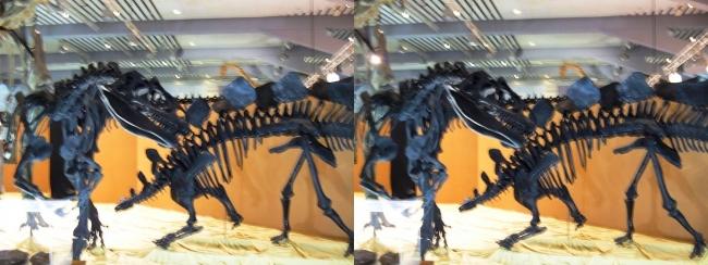 メガ恐竜展2017 ZONE4 アロサウルス・ステゴサウルス骨格復元(交差法)