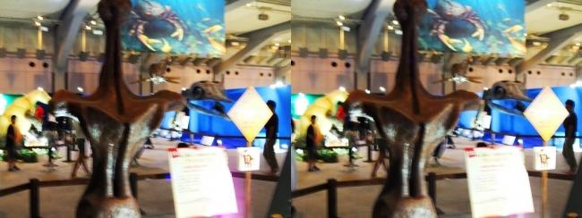 メガ恐竜展2017 ZONE2 アンフィコエリアス胴椎模型(平行法)