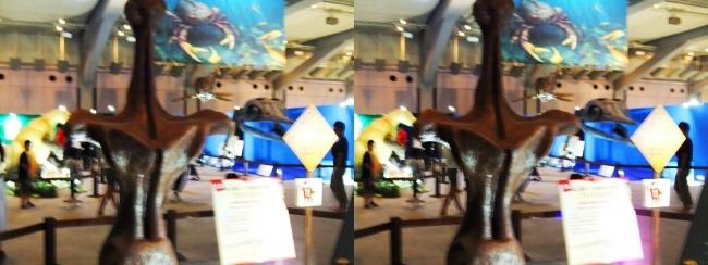 メガ恐竜展2017 ZONE2 アンフィコエリアス胴椎模型(交差法)