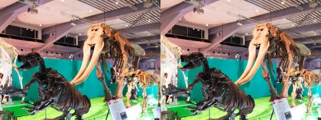 メガ恐竜展2017 ZONE7 パラミロドン・コウガゾウ・ウインタテリウム骨格復元(平行法)