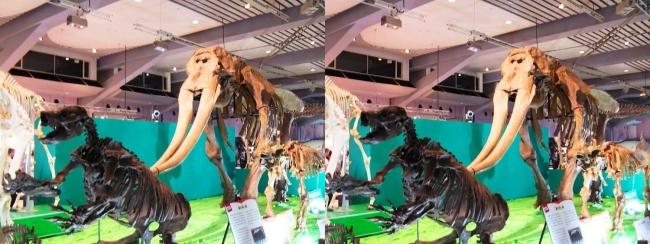 メガ恐竜展2017 ZONE7 パラミロドン・コウガゾウ・ウインタテリウム骨格復元(交差法)