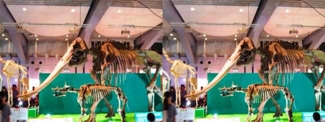 メガ恐竜展2017 ZONE7 コウガゾウ・ウインタテリウム骨格復元(平行法)