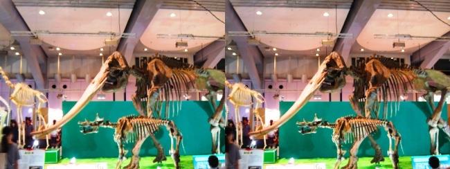 メガ恐竜展2017 ZONE7 コウガゾウ・ウインタテリウム骨格復元(交差法)