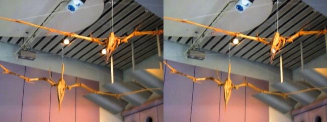 メガ恐竜展2017 ZONE1 アンハングエラ・トゥプクスアラ骨格復元(平行法)