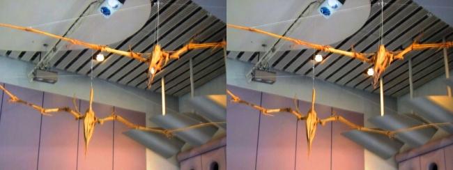 メガ恐竜展2017 ZONE1 アンハングエラ・トゥプクスアラ骨格復元(交差法)