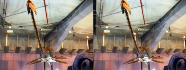 メガ恐竜展2017 ZONE1 タラソメドン骨格復元(平行法)
