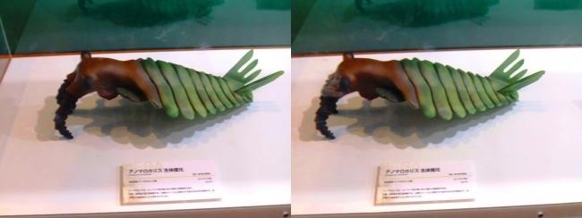 メガ恐竜展2017 ZONE1 アノマロカリス生体復元(平行法)