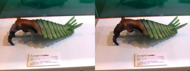 メガ恐竜展2017 ZONE1 アノマロカリス生体復元(交差法)