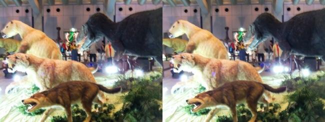 メガ恐竜展2017 ZONE1 ダイアウルフ・スミロドン・ユティランヌス・パラミロドン生体復元(平行法)