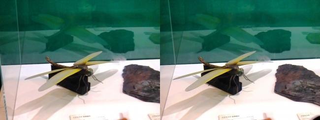 メガ恐竜展2017 ZONE1 メガネウラ生体復元と化石(平行法)
