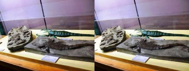 メガ恐竜展2017 ZONE1 ミクソプテルス生体復元・ミクソプテルス化石(平行法)