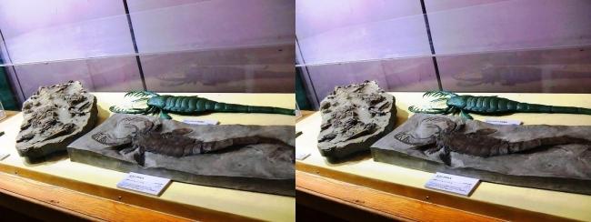 メガ恐竜展2017 ZONE1 ミクソプテルス生体復元・ミクソプテルス化石(交差法)