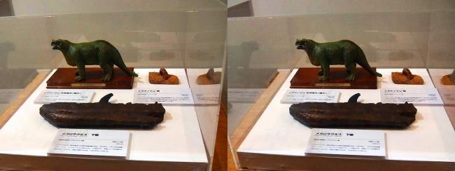 メガ恐竜展2017 ZONE1 イグアノドン生体復元(1850年)と歯・メガメサウルス下顎(交差法)