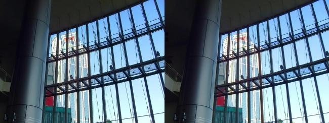 大阪南港ATC ITM棟からの大阪府咲洲庁舎(平行法)