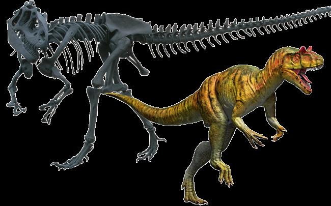 アロサウルス 全身復元骨格/復元画