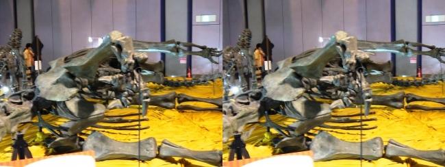メガ恐竜展2017 ZONE4 ディプロドクス骨格復元(平行法)
