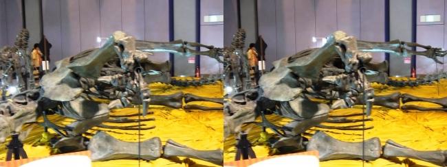 メガ恐竜展2017 ZONE4 ディプロドクス骨格復元(交差法)