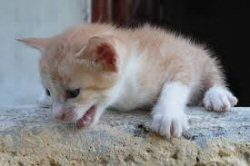250 let kitten get off