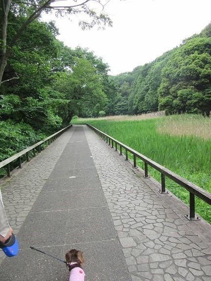 四季の森公園170516⑱