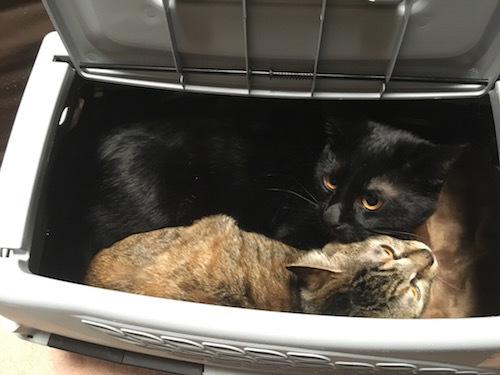 1歳猫箱入り