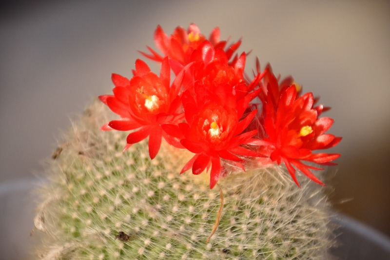 170428庭の花_015