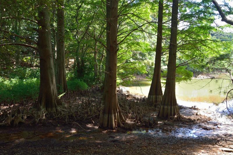 九大の森 (4)