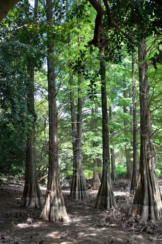 九大の森 (3)