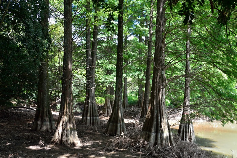九大の森 (2)