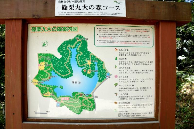 九大の森 (1)