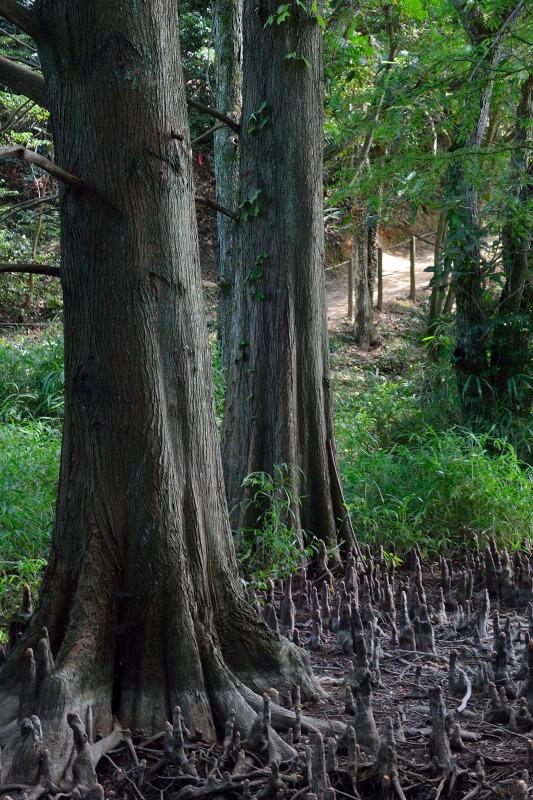 九大の森 (9)
