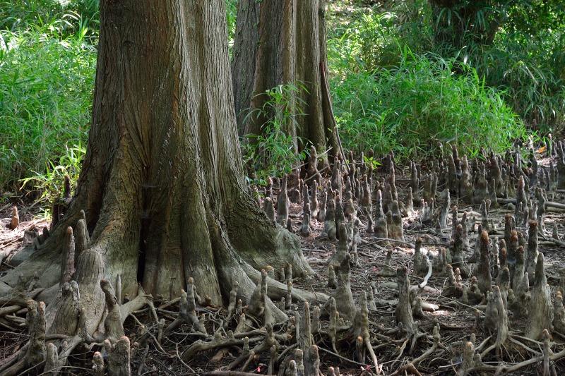 九大の森 (8)