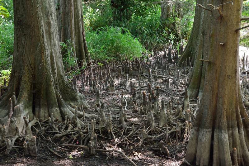 九大の森 (7)