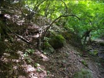 終始林の中の登山道は狭く登りづらい