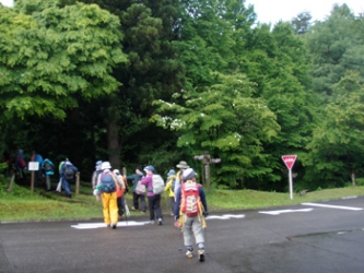 新緑の登山道(キャンプ場前)