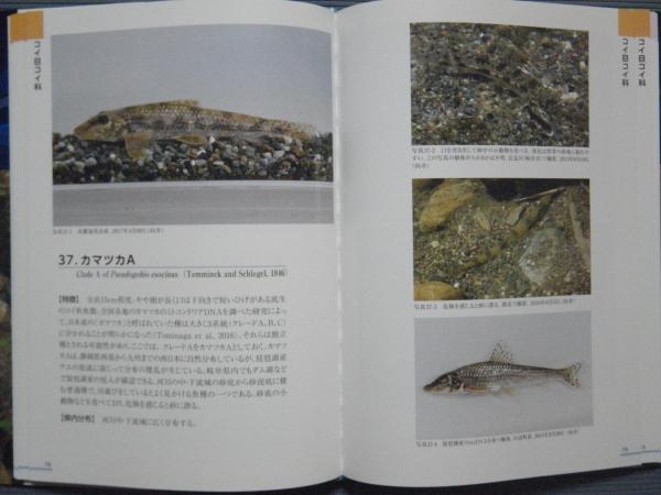 カマツカのページ