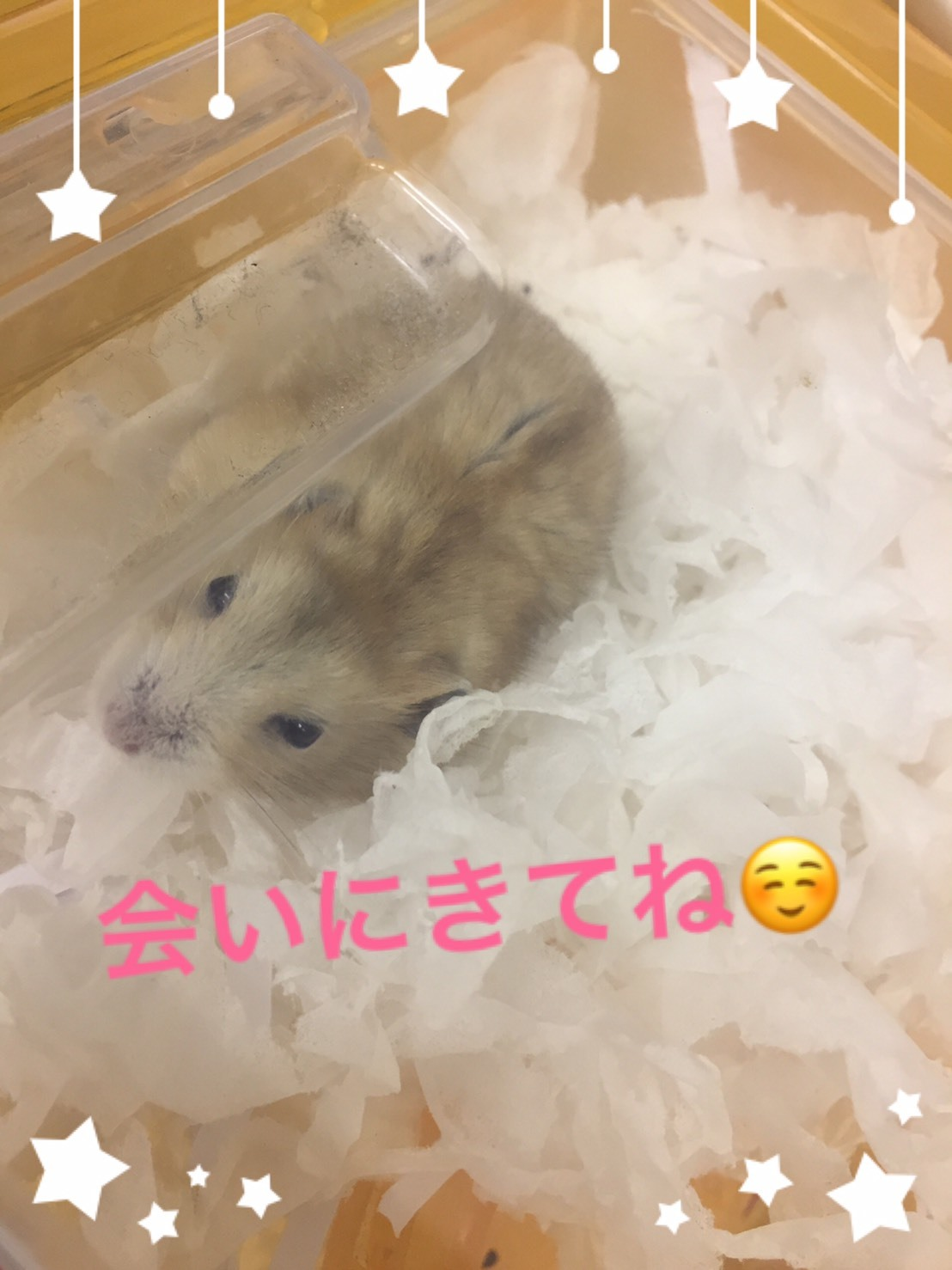 S__5267462.jpg