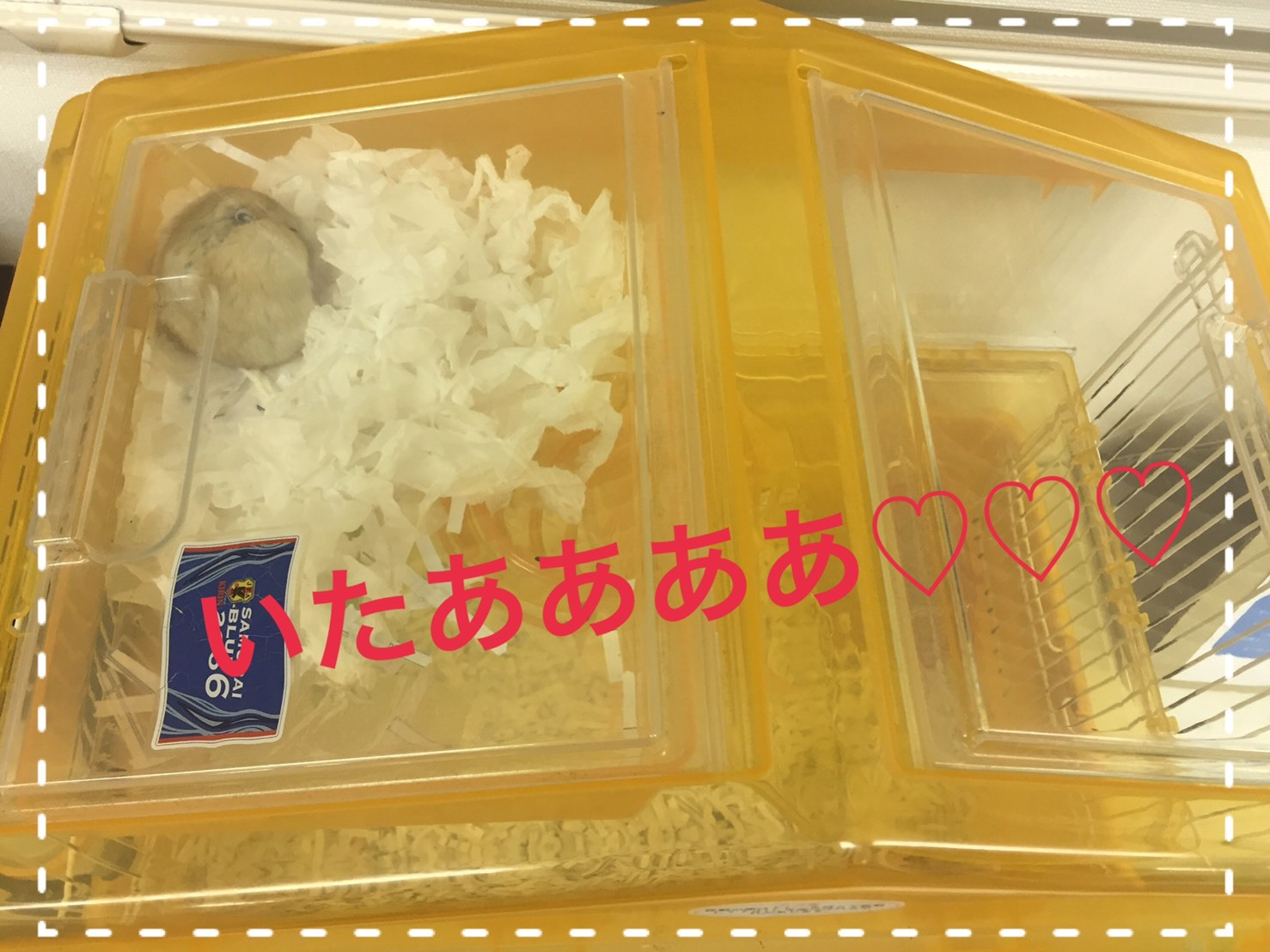 S__5267463.jpg