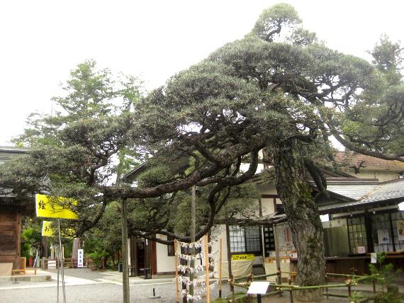 浅間神社(甲斐)山宮遥拝・石・松10