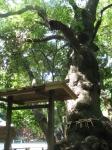 高座結御子神社02-03