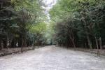 近江神宮・本殿03