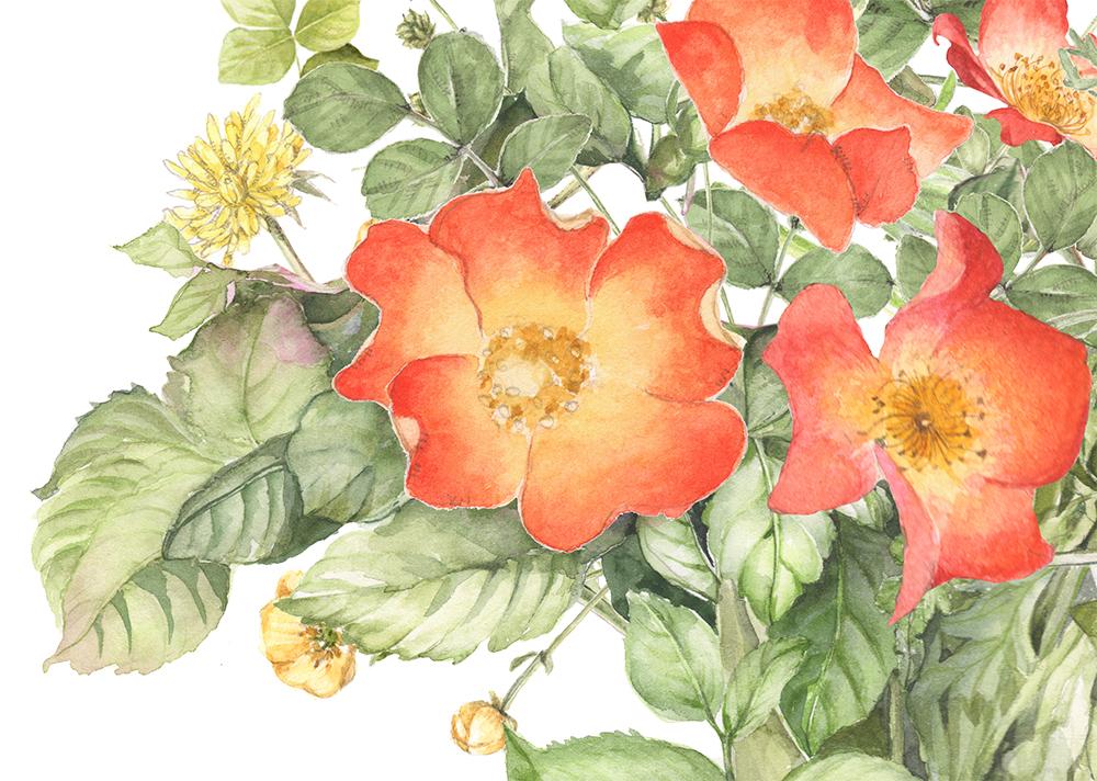 flower129a.jpg