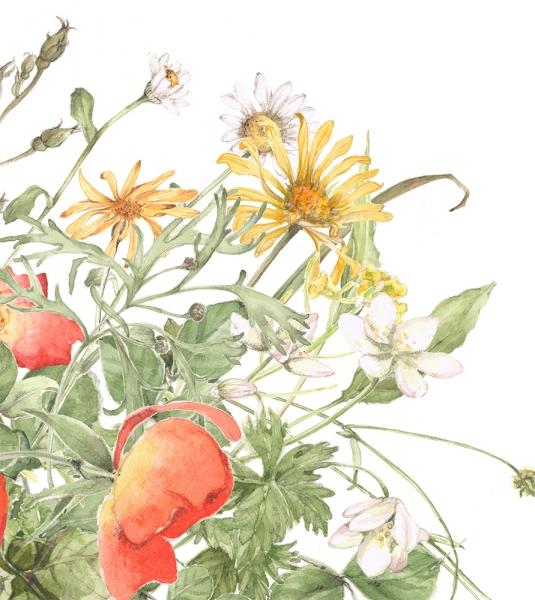 flower129b.jpg