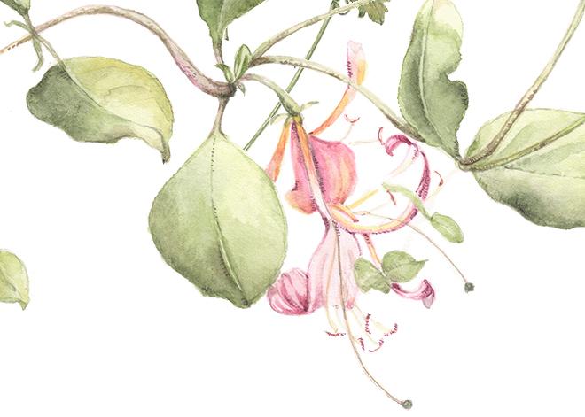 flower133a2.jpg