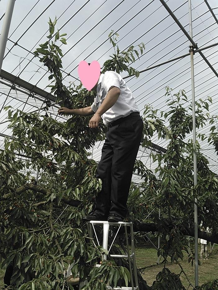 仙台観音・さくらんぼ狩り天童市 044a